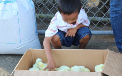 Chicken and Goat Donations